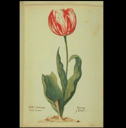 One of the First Financial Scams in History: Tulip Crisis